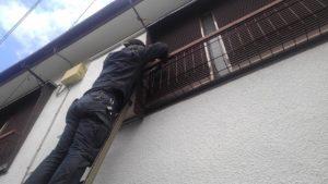 狛江市ネズミ駆除