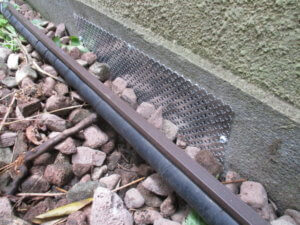 品川区ネズミ駆除